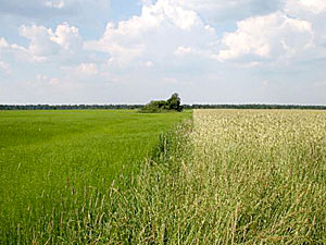 Сегодня в ЦНТИ «Прогресс» в Санкт-Петербурге начался семинар «Оборот и использование земель сельскохозяйственного назначения: законодательство и практика».