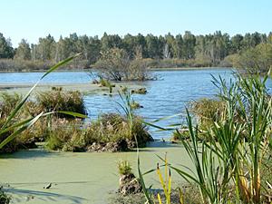 На семинаре «Русловые процессы рек и гидрология болот» поднимаются важные проблемы русловых процессов и гидрологии болот.